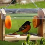 Кормушка для птиц. Кормушка для птиц своими руками - как сделать кормушку.