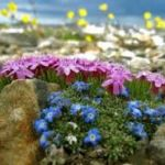 Цветы для клумб. Низкорослые цветы для клумб