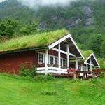 Зеленый сад и озеленение крыш